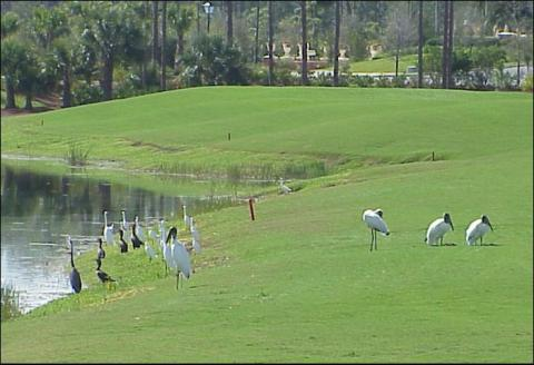 birds-on-the-golf-course